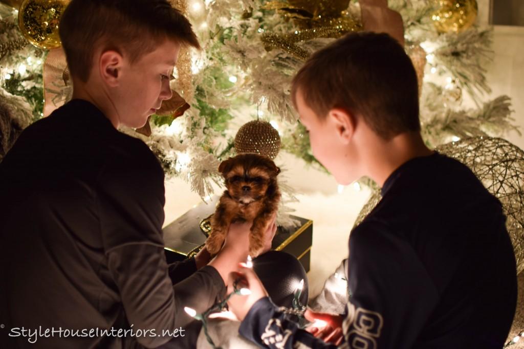 christmas-nights-tour